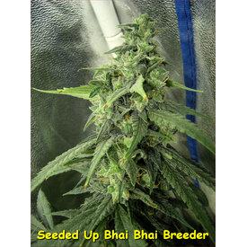 Kingdom Organic Seeds Congo Bhai Bhai Reg 5 pk