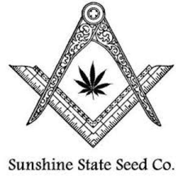 Sunshine State Seed Co. Chem Dubb Cookies Reg 10 pk