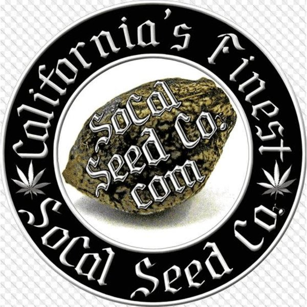 SoCal Seed Co. Souther'n D'Lights Reg 5 pk