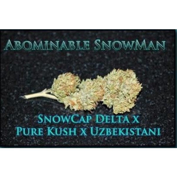 SnowHigh Seeds Abominable Snowman Reg 10 pk