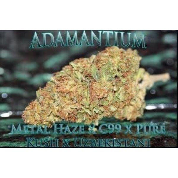 SnowHigh Seeds Adamantium Reg 5 pk