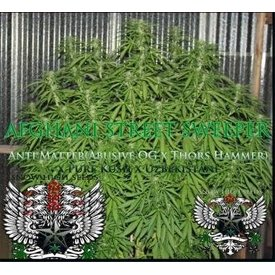 SnowHigh Seeds Afghani Street Sweeper Reg 10 pk