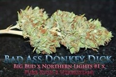 Products tagged with Kush