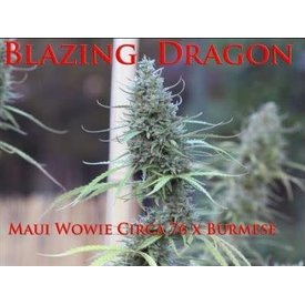SnowHigh Seeds SnowHigh Seeds Blazing Dragon Reg 10 pk