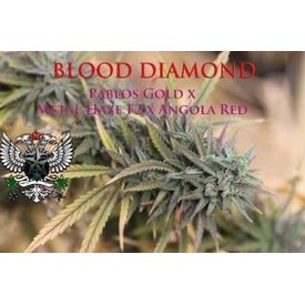SnowHigh Seeds SnowHigh Seeds Blood Diamond Reg 10pk