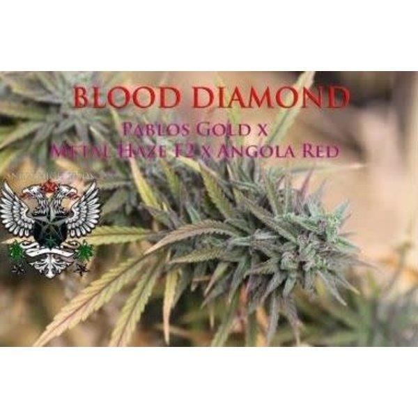 SnowHigh Seeds SnowHigh Seeds Blood Diamond Reg 10 pk