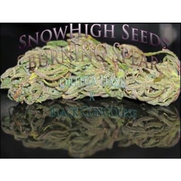 SnowHigh Seeds Burning Spear Reg 10 pk