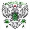 SnowHigh Seeds Epic Daze Purple Haze Reg 10 pk