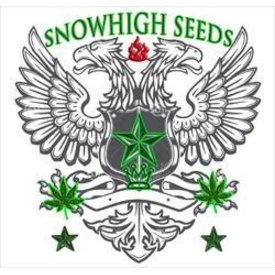 SnowHigh Seeds SnowHigh Seeds Gold Dragon 1947 Reg 10 pk