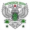 SnowHigh Seeds Golden Dragon Reg 10 pk