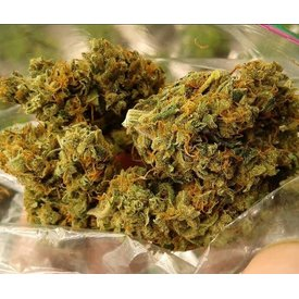 SnowHigh Seeds SnowHigh Seeds Golden Colombian Kush Reg 10 pk