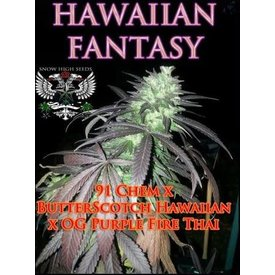 SnowHigh Seeds Hawaiian Fantasy Reg 10 pk
