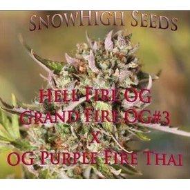 SnowHigh Seeds SnowHigh Seeds Hellfire OG Reg 10 pk