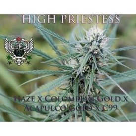 SnowHigh Seeds High Priestess Reg 10 pk