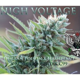 SnowHigh Seeds SnowHigh Seeds High Voltage Reg 10 pk