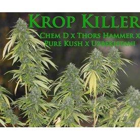 SnowHigh Seeds SnowHigh Seeds Krop Killer Reg 10 pk