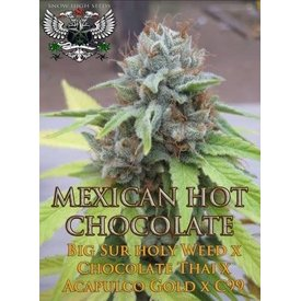 SnowHigh Seeds SnowHigh Seeds Mexican Hot Chocolate Reg 5 pk