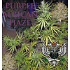 SnowHigh Seeds Purple African Haze Reg 10 pk