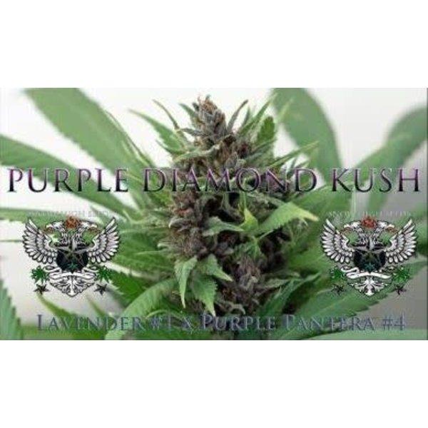 SnowHigh Seeds Purple Diamond Kush Reg 10 pk