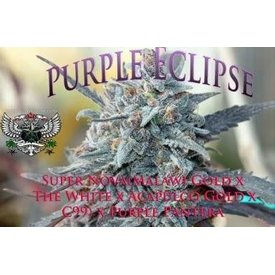SnowHigh Seeds SnowHigh Seeds Purple Eclipse Reg 10 pk