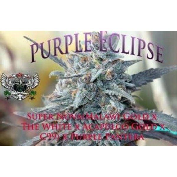 SnowHigh Seeds Purple Eclipse Reg 10 pk