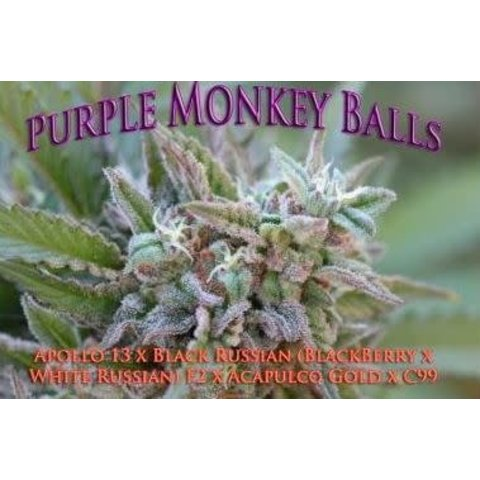 Purple Monkey Balls Reg 10 pk