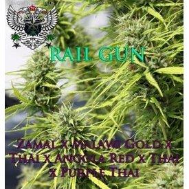 SnowHigh Seeds SnowHigh Seeds Rail Gun 10pk