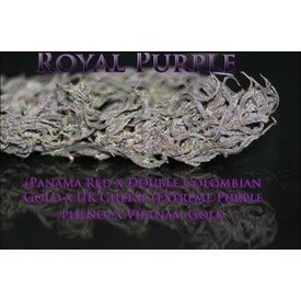 SnowHigh Seeds SnowHigh Seeds Royal Purple Reg 10 pk