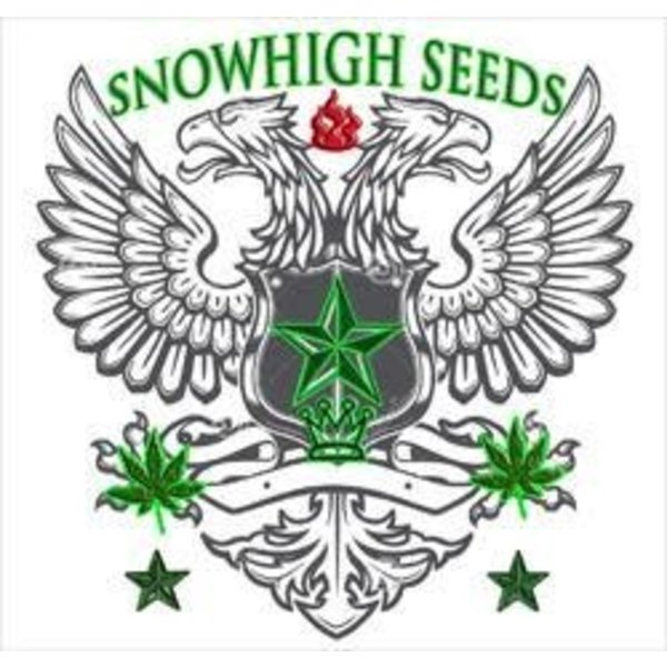 SnowHigh Seeds Silver Afghani Warlord Reg 10 pk