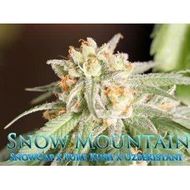 SnowHigh Seeds SnowHigh Seeds Snow Mountain Reg 10 pk