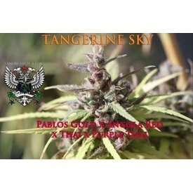 SnowHigh Seeds Tangerine Sky Reg 10 pk