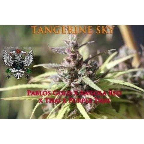 Tangerine Sky Reg 10 pk