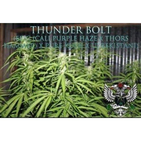 SnowHigh Seeds Thunderbolt Reg 10 pk