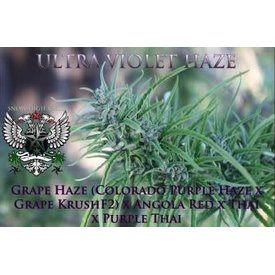 SnowHigh Seeds Ultraviolet Haze Reg 10 pk