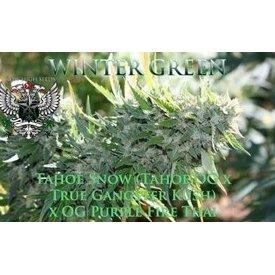 SnowHigh Seeds SnowHigh Seeds Winter Green Reg 5 pk