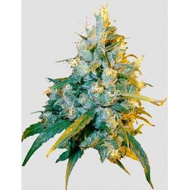 Secret Valley Seeds Secret Valley Seeds Jamaican Grape Reg 10 pk
