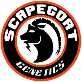 Scapegoat Scapegoat We Not Me Reg 10 pk