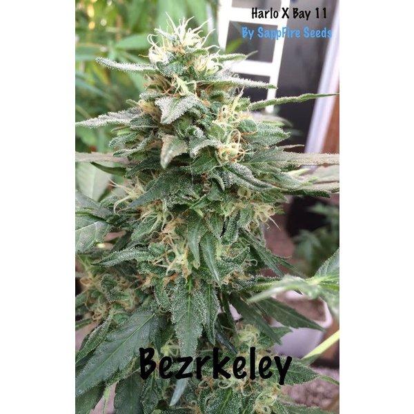 Sappfire Bezrkeley Reg 5 pk