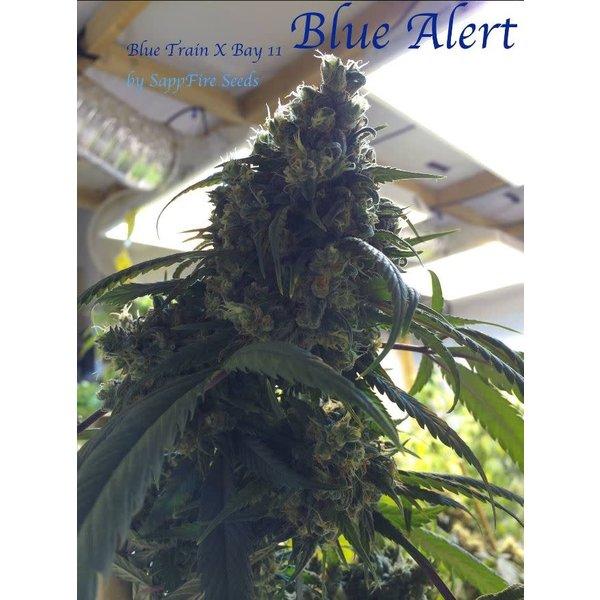 Sappfire Blue Alert Reg 5 pk