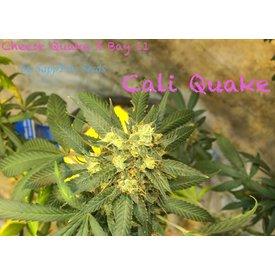 Sappfire Sappfire Cali Quake Reg 5 pk