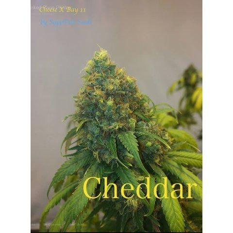 Cheddar Reg 5 pk