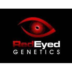 Red Eyed Genetics Red Eyed Genetics Triple Barrel Reg 10 pack