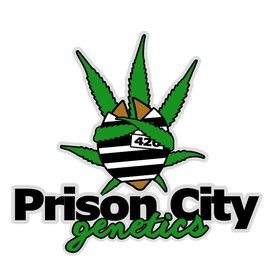 Prison City Genetics Prison City Genetics Fire Cookies (Monster Cookies x GG#4 x Grape Inferno) 5 pack