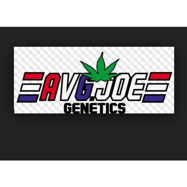 Average Joe AJG East Coast Dough Reg 5 pk
