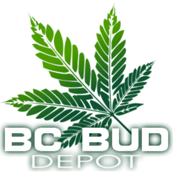 BC Bud Depot BCBD RMS- Kodiak Gold Reg 12 pk