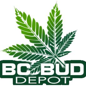 BC Bud Depot BCBD- RMS Golden Temple Kush Reg 12 pk