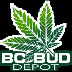 BC Bud Depot RMS Golden Temple Kush Reg 12 pk