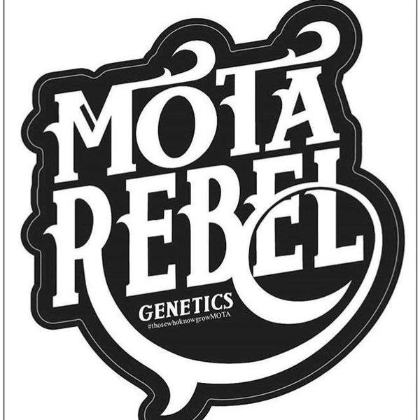 Mota Rebel Pineapple Orange Peel Reg 10 pk