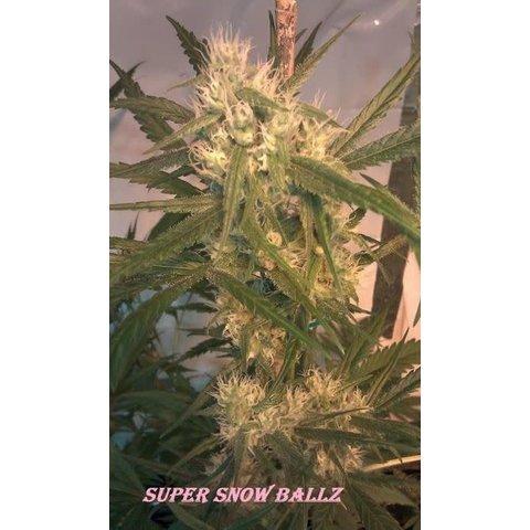Super Snow Ballz Reg 10 pk