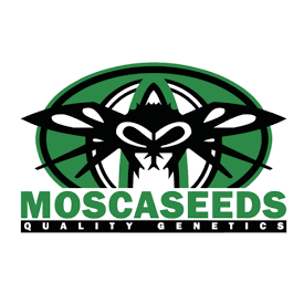 Mosca Seeds Mosca Seeds Pinky Blinders Limited Ed. Reg 10 pk